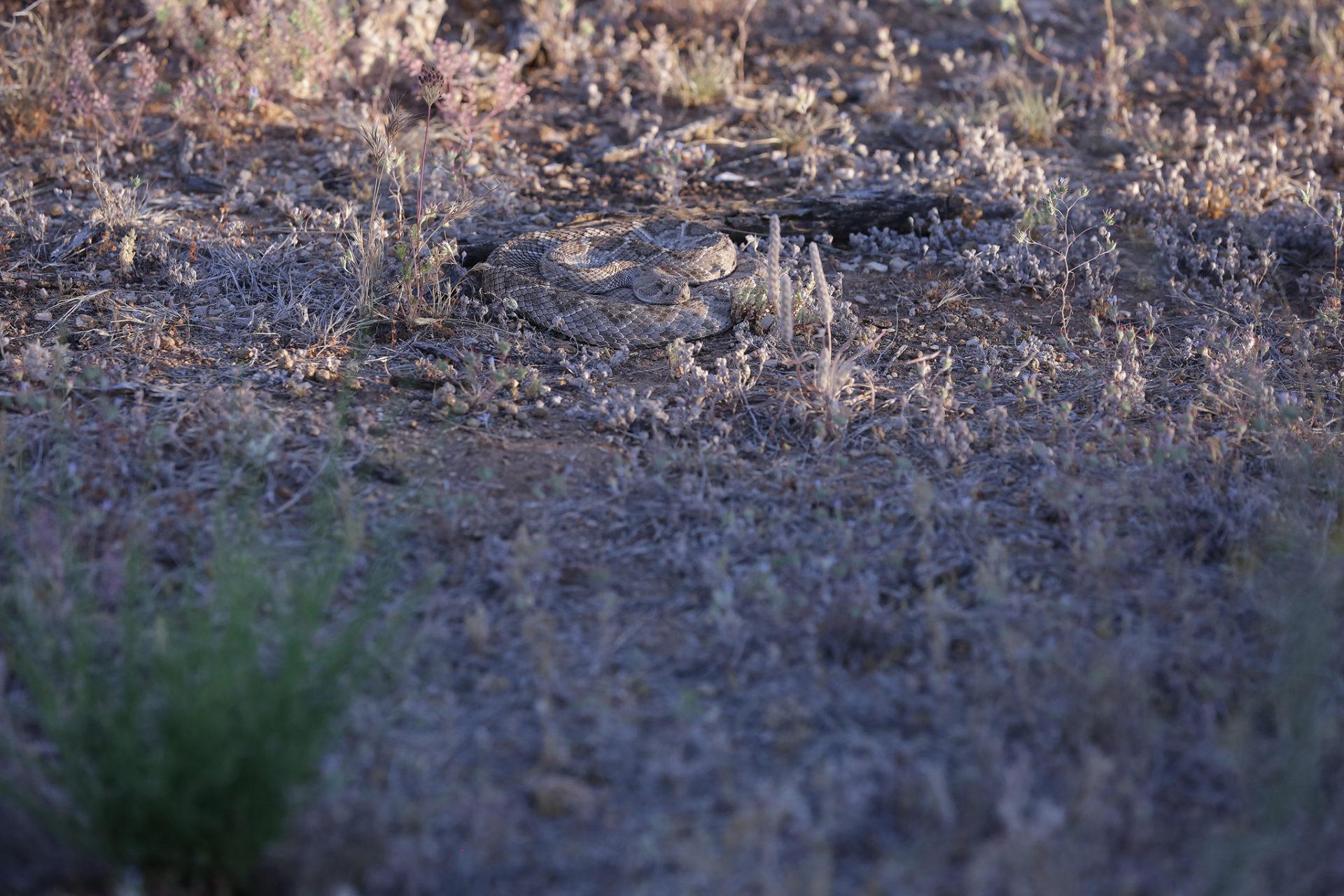 Tucson Desert PHotographer