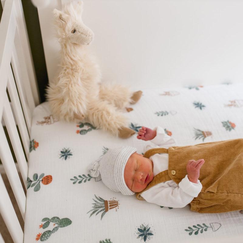 Introducing Graham's Family | Newborn Lifestyle Photo Session | Tucson, Arizona